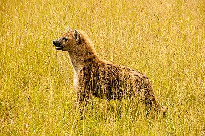 National park Kenia - p5330307 by Böhm Monika