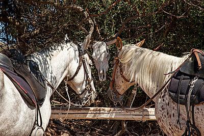 Zwei Pferde - p712m1541259 von Jana Kay
