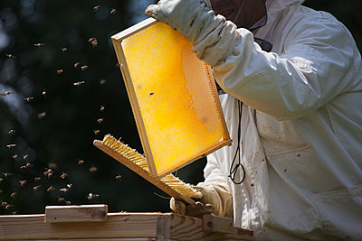Midsection of beekeeper brushing bees from frame of hive at farm - p301m1070122f by Halfdark