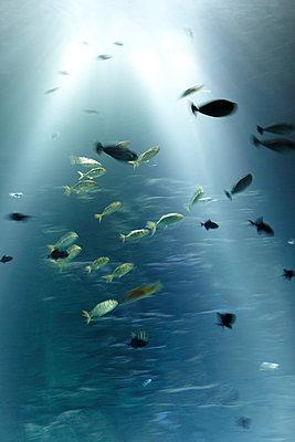 Fische im Riesenaquarium - p4150381 von Tanja Luther