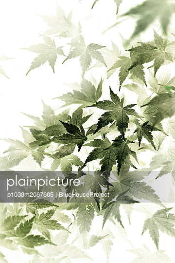 Japanese acer - p1038m2087605 by BlueHouseProject