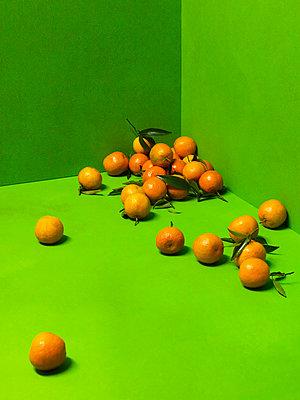 Mandarin - p1052m794375 by Wolfgang Ludwig