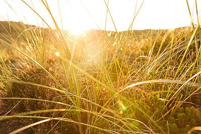 Graslandschaft auf Sylt - p432m1189777 von mia takahara