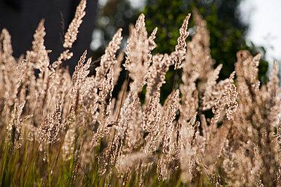 Grasses - p817m2016124 by Daniel K Schweitzer