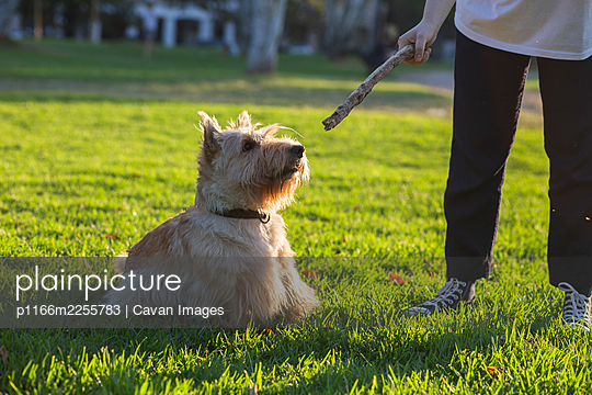 A girl plays with her dog in a Buenos Aires city park - p1166m2255783 by Cavan Images