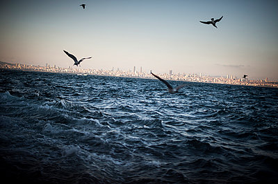 Seagulls - p1007m959916 by Tilby Vattard