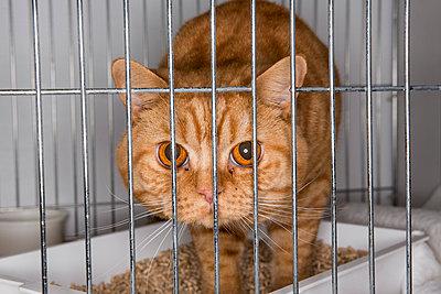 Katze im Käfig auf einer Katzenshow - p1057m1564459 von Stephen Shepherd