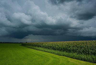 Thunderstorm over cornfield - p1132m1486806 by Mischa Keijser