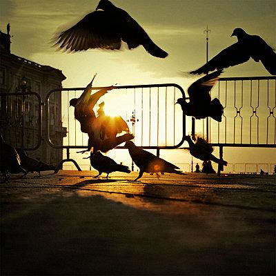 Wing beat - p452m1091384 by Petr Nagy