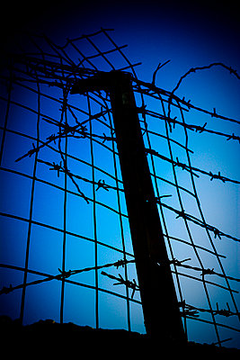 Barbed wire fence - p1072m941455 by Tal Paz-Fridman photography