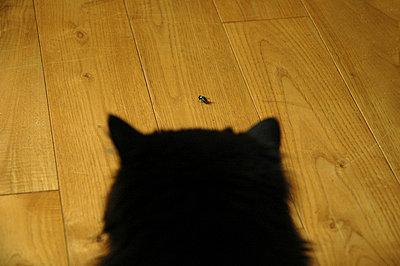 Katze lauert - p4460133 von Jan Knoff