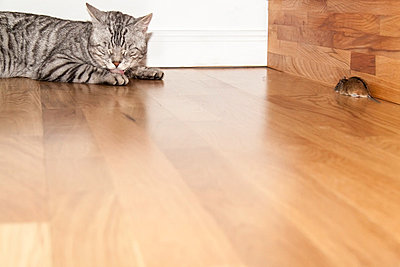 Cat and mouse - p7390734 by Baertels
