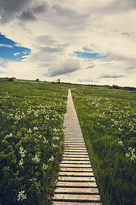 Wooden path,Skaftafell, Iceland - p1084m986807 by Operation XZ