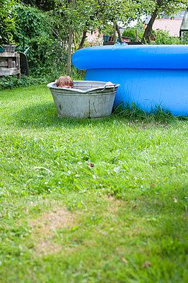 Garden holidays - p116m2289828 by Gianna Schade