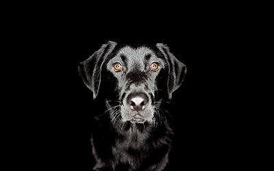 Hundeportrait - p1272m1084101 von Steffen Scheyhing