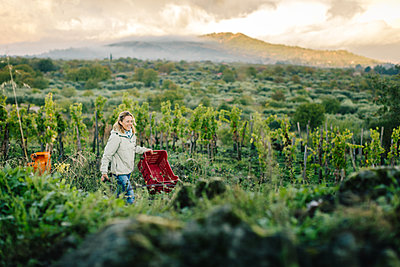 Woman carrying crate in vineyard - p429m1226927 by heshphoto