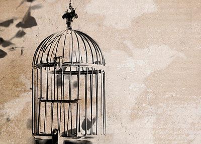 Bird cage - p450m902380 by Hanka Steidle