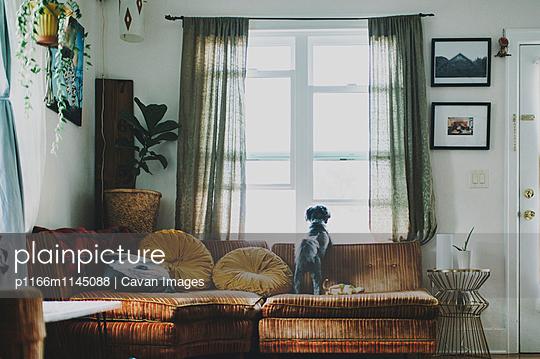 p1166m1145088 von Cavan Images
