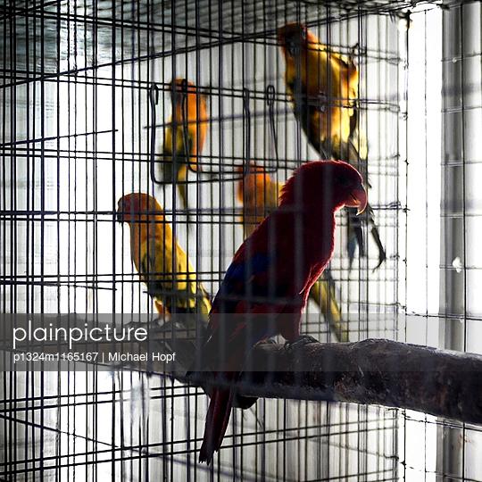 Papageien im Käfig - p1324m1165167 von michaelhopf