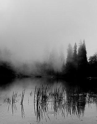 Nebel - p248m739474 von BY