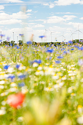 Windpark mit Blumenwiese - p1079m1184978 von Ulrich Mertens