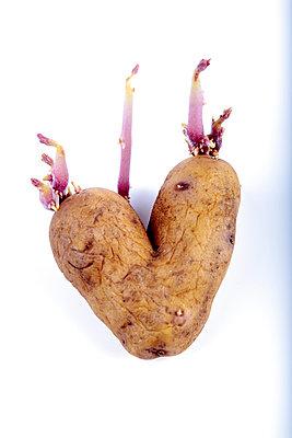 Potato heart - p179m813445 by Roland Schneider