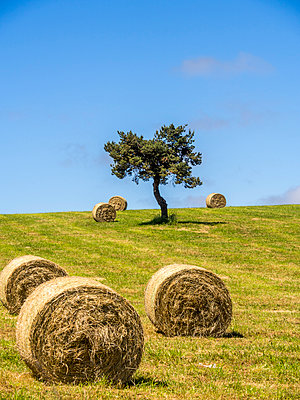 Bales of hay in a field in France - p813m1159513 by B.Jaubert