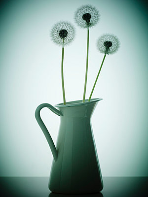 Three Dandelion flowers in an old fashioned vase - p968m658839 by roberto pastrovicchio