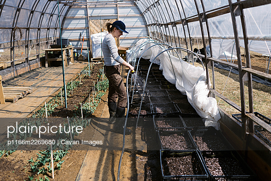 A young female farmer watering her seedlings in the greenhouse - p1166m2269680 by Cavan Images