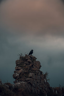 Bird on old stone wall - p1681m2283431 by Juan Alfonso Solis
