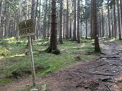 Oberpfälzer Wald - p240m1424592 von Valerie Wagner