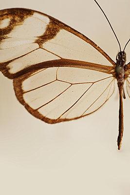 Macro Butterfly - p1054m2278045 by Maria Kazvan