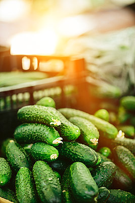 Heap Green cucumbers at Farmers' market - p1166m2194030 by Cavan Images