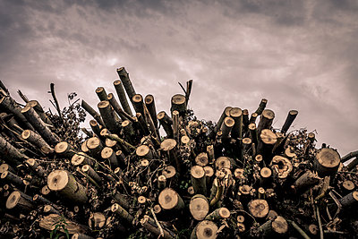 Pile of wood - p1402m1586183 by Jerome Paressant