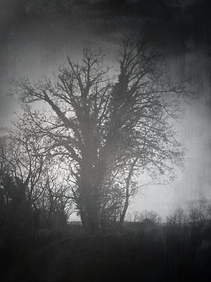 Tree in mist - p945m2178890 by aurelia frey