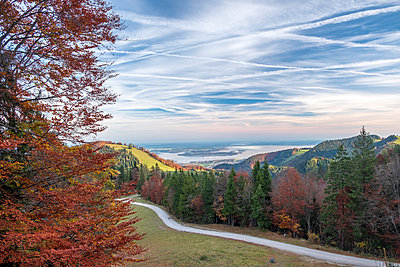 Germany, Upper Bavaria, Aschau, Autumn forest, View to Chiemsee in the evening - p300m2060102 by Hans Mitterer