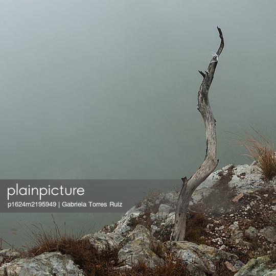Dead tree on the steep coast in the fog, Mallorca - p1624m2195949 by Gabriela Torres Ruiz