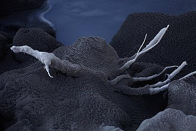Von Vulkanasche bedeckter Ast vor einem Bach - p1314m1189962 von Dominik Reipka