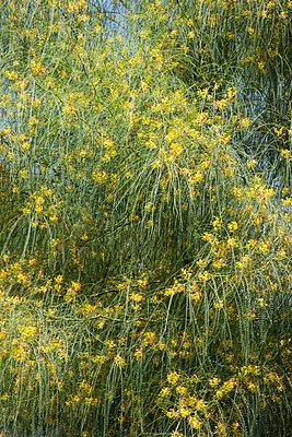 Yellow Flowers  - p1514m2063936 by geraldinehaas