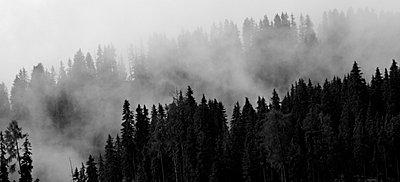 Wald im Nebel - p9792201 von Jaeckel