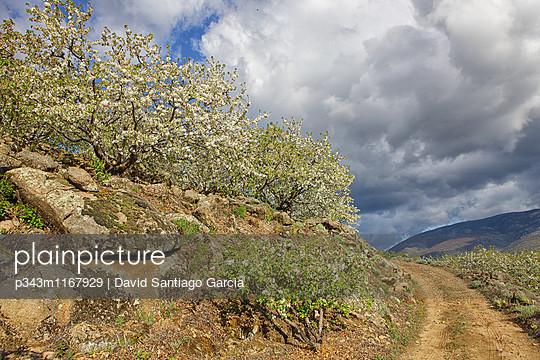 p343m1167929 von David Santiago Garcia