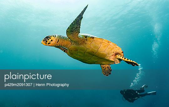 Underwater view of Hawksbill sea turtle and diver, Raja Ampat, Sorong, Nusa Tenggara Barat, Indonesia - p429m2091307 by Henn Photography