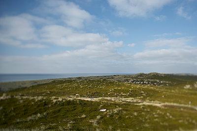Weg zum Strand - p1200m1143806 von Carsten Görling