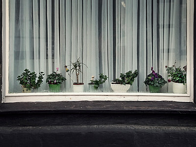 Schaufenster mit Blumen - p1282m1105067 von Stefano Boragno