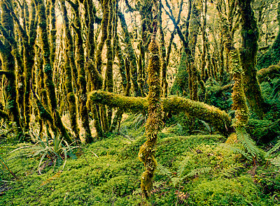 Mooslandschaft - p362m1541412 von André Wagner