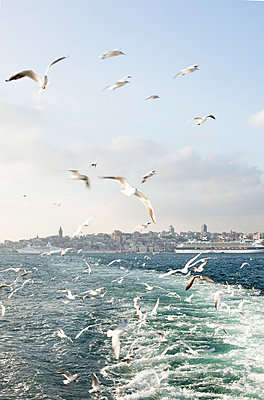 Following the ferry - p8280532 by souslesarbres