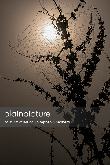 A delicate spider web covered in dew silhoutted as it hangs from a dead plant in the winter set against the rising sun. - p1057m2134644 by Stephen Shepherd