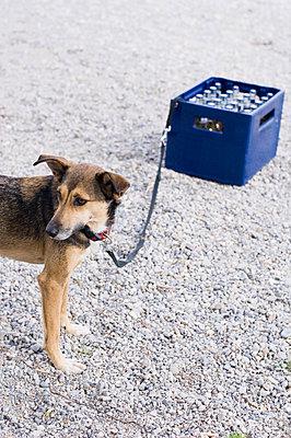 Getränkekiste mit angeleinten Hund - p1316m1160393 von Peter von Felbert
