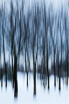 Trees in winter, blurred - p300m998072f by Aleksandar Novoselski