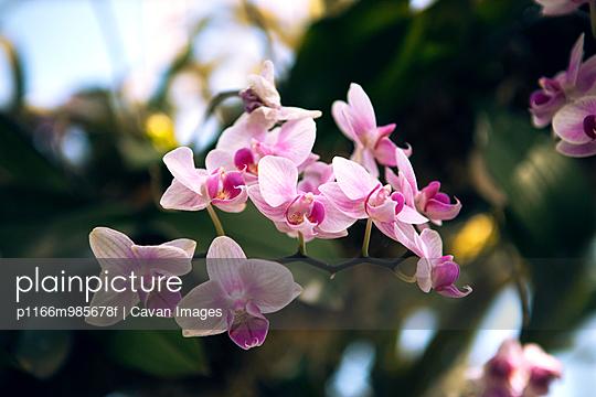 p1166m985678f von Cavan Images
